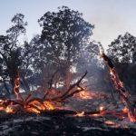 ۵۰ هکتار از جنگلهای کرخه در آتش سوخت
