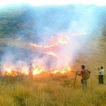 جنگلهای سرخه شوش آتش گرفت