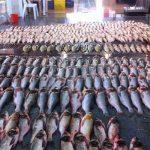 صادرات بیش از ۱۶ هزار تن ماهی و میگو به آنسوی مرزها