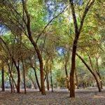 تامین نشدن سوخت ۲۰۰ میلیارد ریال به جنگلهای دزفول خسارت زد