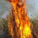 دود ناشی از آتش سوزی مزارع موجب کاهش دید رانندگان میشود