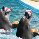 انعقاد قراداد ساخت مجموعه بزرگ تفریحی پارک دلفیناریوم اهواز با سرمایه گذاری بخش خصوصی