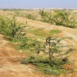 ۱۵۰ میلیارد ریال از صندوق ذخیره ملی به کمربند سبز اهواز اختصاص یافت