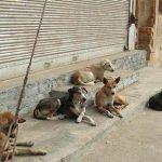 آغاز احداث سایت نگهداری از سگهای ولگرد