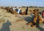 مسابقات شترسواری بومی خوزستان برگزار میشود