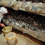 ارائه تسهیلات کشاورزی به بانوان جهت تنظیم بازار در خوزستان