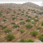 تاکید استاندار خوزستان بر نگهداری نهال های کشت شده در کانون های گردوغبار