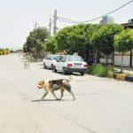 هاری، شایعترین بیماری در حیات وحش خوزستان