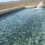 پیشبینی تولید بیش از ۷۰ تن ماهیان گرمابی در خوزستان