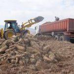 هزینه های کشاورزان برای کشت چغندر افزایش یافته است