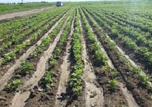 استمهال ۱۸ماهه برای بازپراخت تسهیلات بخش کشاورزی در خوزستان