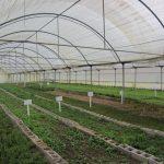 افتتاح اولین گلخانه کارگاهی مدارس استثنایی خوزستان در بهبهان