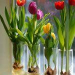 با گلهای تصفیهکننده هوا آشنا شوید