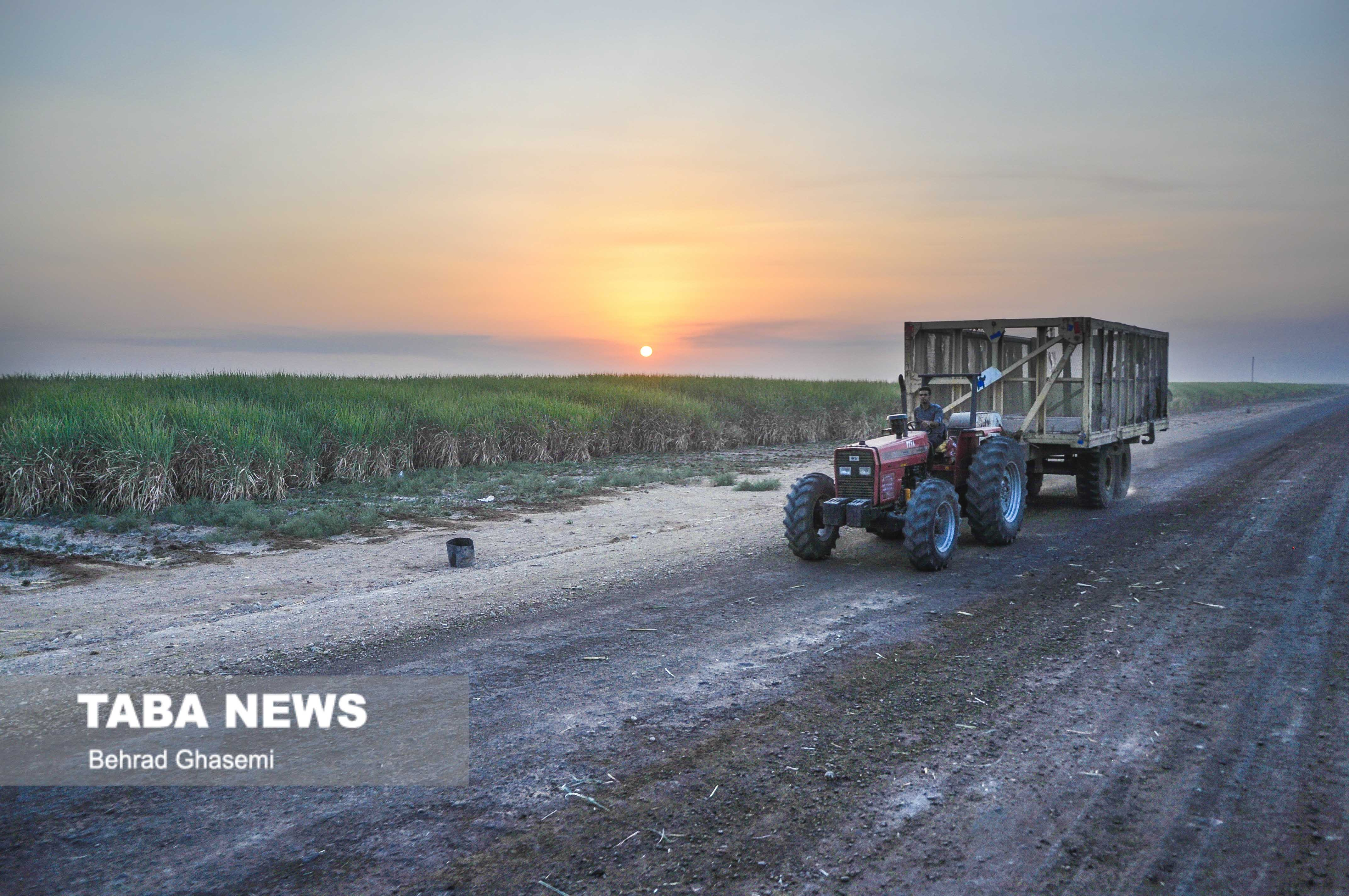 افزایش محصولات کشاورزی خوزستان با اجرای طرح۵۵۰ هزار هکتاری