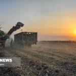 تولید سالانه حدود ۵۵۰ هزارتن محصول کشاورزی در شوشتر