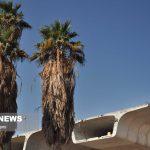 نابودی سه میلیون نخل خرمای آبادان در اثر خشکسالی