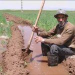 برخورد قضایی با موارد آبیاری مزارع با فاضلاب در خوزستان
