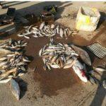 دستگیری چهار متخلف صید غیرمجاز ماهی با الکترو شوکر
