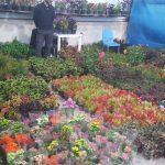 افتتاح دومین نمایشگاه بزرگ گل و گیاه در اهواز