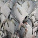اعمال قانون برای عمده فروشان بازار ماهی فروشان