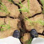 مسئولان جهادکشاورزی باید کشاورزان را نسبت به تغییر الگوی کشت قانع کنند