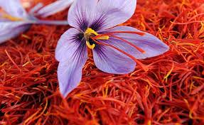 تولید ۹۷ درصد زعفران دنیا در ایران