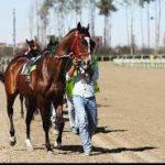 جشنواره ملی اسب اصیل عرب در دزفول آغاز شد