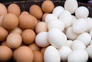 ممنوعیت فروش تخممرغ فلهای فعلا منتفی است