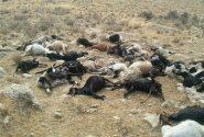 آغاز پرداخت خسارت خشکسالی به دامداران خوزستانی