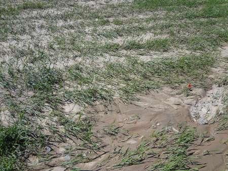 ۶۴۸میلیارد ریال غرامت به کشاورزان خسارت دیده خوزستان پرداخت شد
