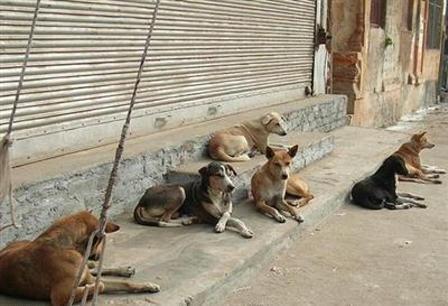 سایت نگهداری و عقیمسازی سگهای بلاصاحب اهواز ایجاد میشود