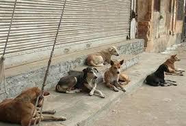آغاز بکار عملیات اجرایی ساخت پناهگاه سگهای بلاصاحب در پارک شهروند