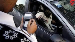 واکنش پلیس به فیلم برخورد با سگگردانی