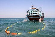 آزادسازی صید ماهی شوریده در صیدگاه های خوزستان و بوشهر