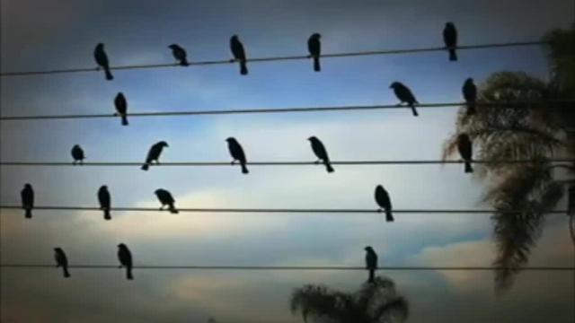 نصب پرنده پران بر روی خطوط برق در تالاب شادگان
