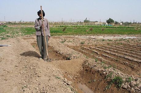 بازدید مدیران جهاد نصر از پروژه های آبیاری زهکشی شلمچه
