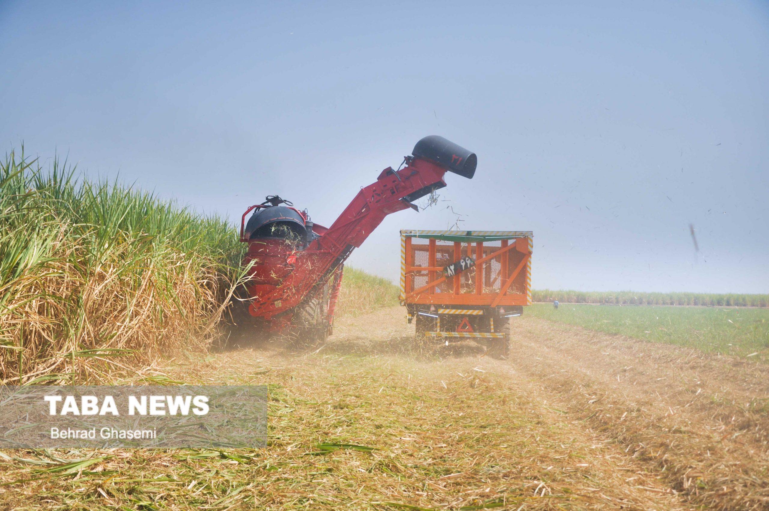 طرح های کشاورزی دلیل شوری کارون هستند