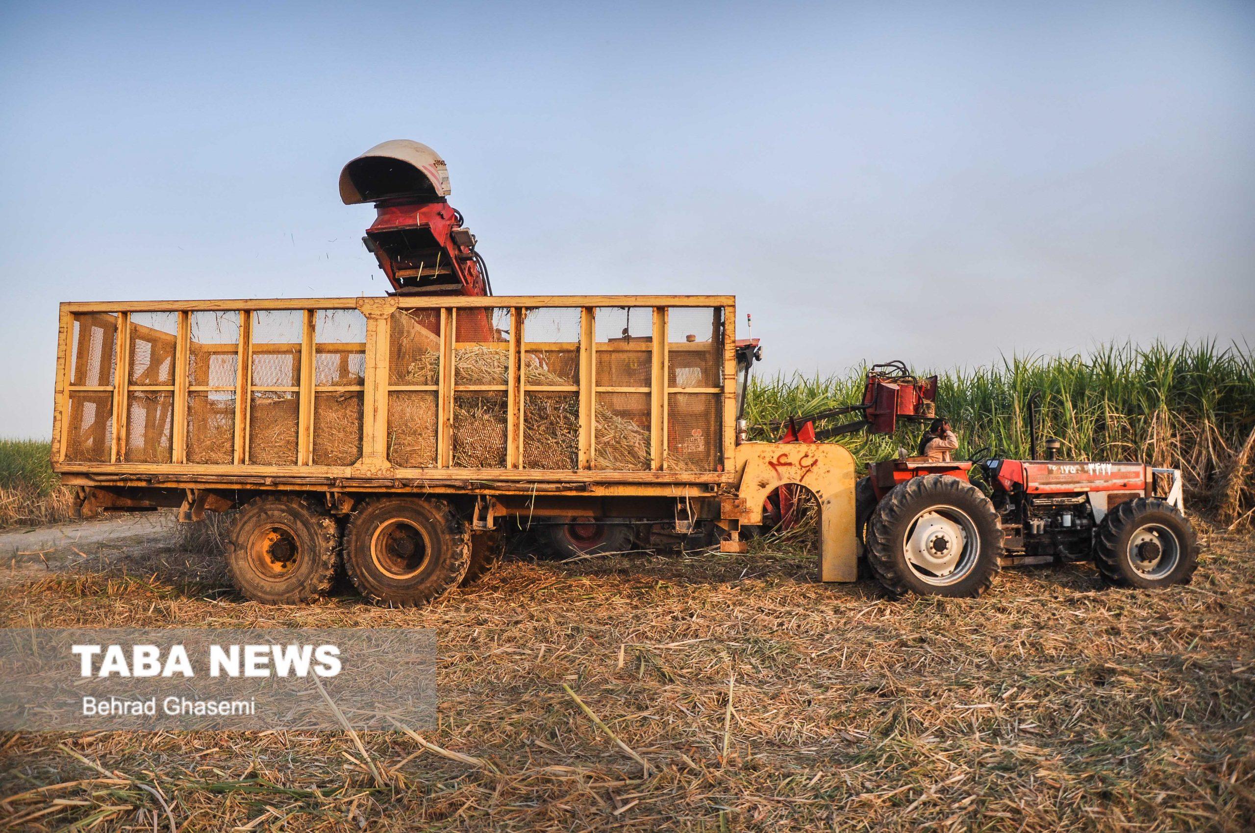 ضرورت تهیه برنامه زیست محیطی برای کاهش برداشت سیاه از مزارع نیشکر استان