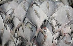 صید ماهی حلوا سفید در خوزستان آزاد شد