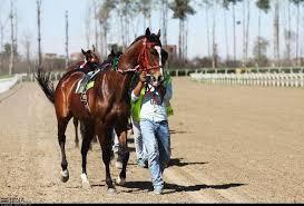 مسابقات کورس اسب کشوری در اهواز برگزار شد